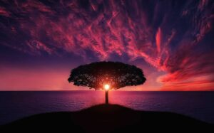 beautiful sunset through a tree